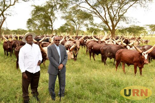 Presidents Yoweri Museveni of Uganda and Omar Hassan al Bashir of Sudan at Kisozi farm in Gomba district.