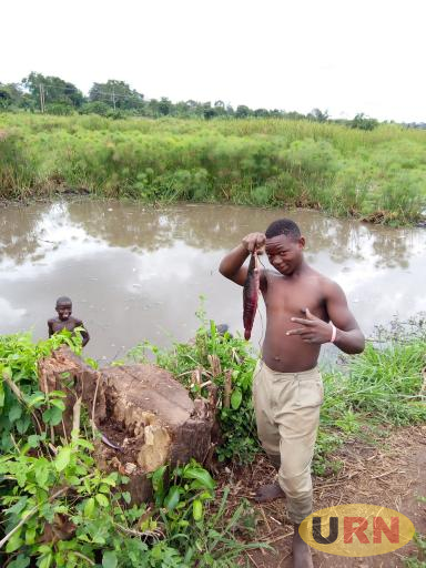 A boy celebrating after a fish catch at Kagoye wetland near Luweero town council.